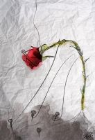 but she has some thorns ! by NOUR-55