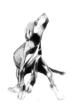 pup sketch 1998 by lilfrog