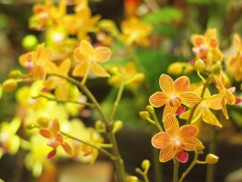 Orchids by ECLF