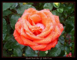 Beaded Scarlet Rose 286 by Eolhin