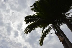 Palm trees and grey sky by A1Z2E3R