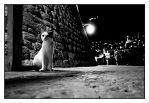 cats of Dubrovnik 16 by lightdrafter