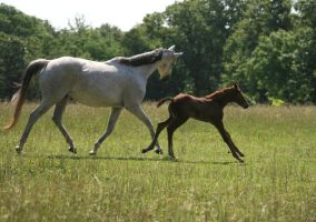 Mare and Foal .:Stock:. by Photopolis