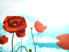 Poppies by caseycole11