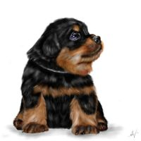 Zara by Lerimpresa