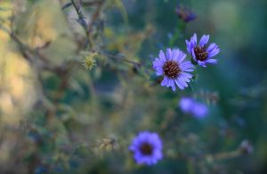 blue effect by iacobvasile