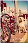 Buddy being vintage by Recycled-Oxygen