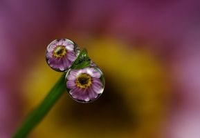 Dew Drop Refractions 10 by Alliec