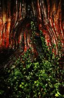 Ivy and Yew... by EarthHart