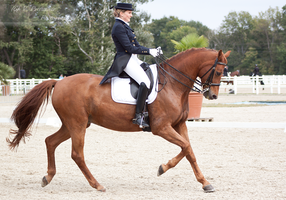 Dressage Cup_38 by CalyHoney