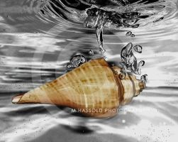 shell by Finvara