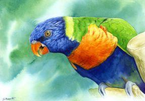 Rainbow Lorikeet by LucieOn