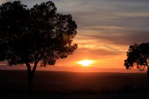 sunset and trees by AndreaP95