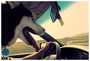 cruisin' by FigoTheCat