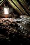 Abandoned Store:  Attic and Insulation by basseca