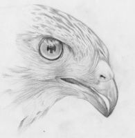 Hawk by Yukija