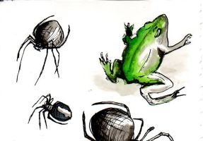 Frog and Spiders by airbirth
