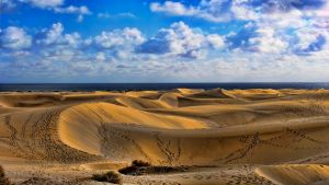 Dune Tracks by Frankief