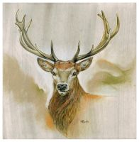 Red Deer Drawing by popChar