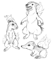 Real -- Cyndaquil Line by SOAMan