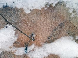 Free photo texture - Timber cut in a snowdrift #3 by croicroga