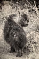 Brown Hyena Pup by MrStickman