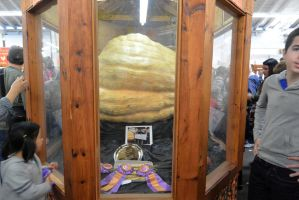 Topsfield Fair, A Great Pumpkin Top Winner 2 by Miss-Tbones