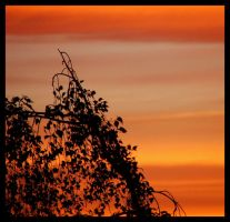 Sunset in Wilmslow by Master-G