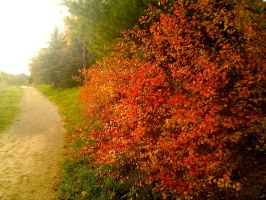Autumn trail by Onyxride