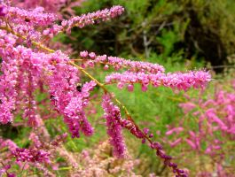 Pink Galore by floramelitensis