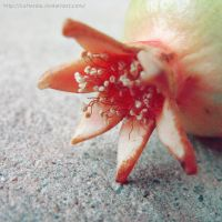 Life span of a pomegranate by Cattereia