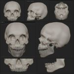 Human Skull: Anatomical Study - in zBrush by tinanewtonart