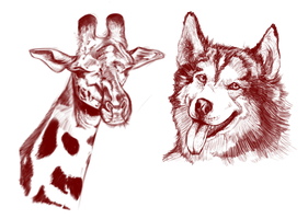 Realism Attempt Sketches by SnowyCakes