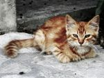 Little Cat by Chater