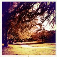 Hipstamatic At the Park 1 by Sajextryus