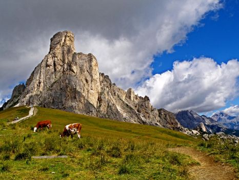 To pasture by Sergiba