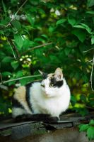homeless cats 05 by rootkit0