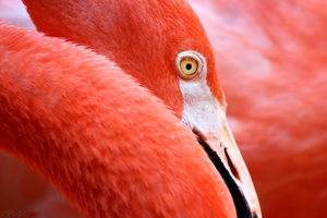 Flamingo Portrait by FriendFrog