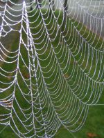 Spider Web Stock 1 by chamberstock