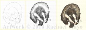 Process: Badger by rachaelm5