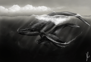Humpbacks by gothams--reckoning