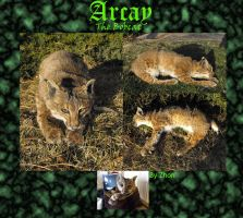 Arcay the Cuddly Bobcat by Zhon