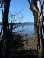 Ocean Through The Trees by our-lady-of-sorrows1