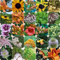Flower Collage by barefootphotos