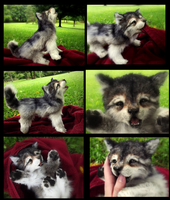 SOLD HAND MADE Poseable Baby Wolf Pup! by Wood-Splitter-Lee