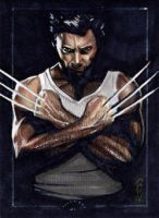 Wolverine - Sketch Card by J-Redd