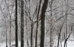 Glass Forest - Winter by BlackHoleInAJar