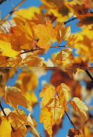 spare diptych. by frozenfragrance