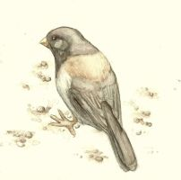 Dark-Eyed Junco Watercolor by Aki-rain