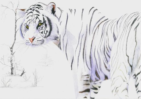 White Tiger by Black-Panther-Neko